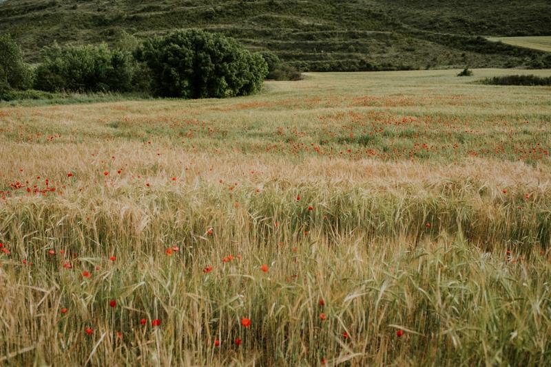 retrato-gorka-de-la-granja-fotografo-san-sebastian-gipuzkoa_0002